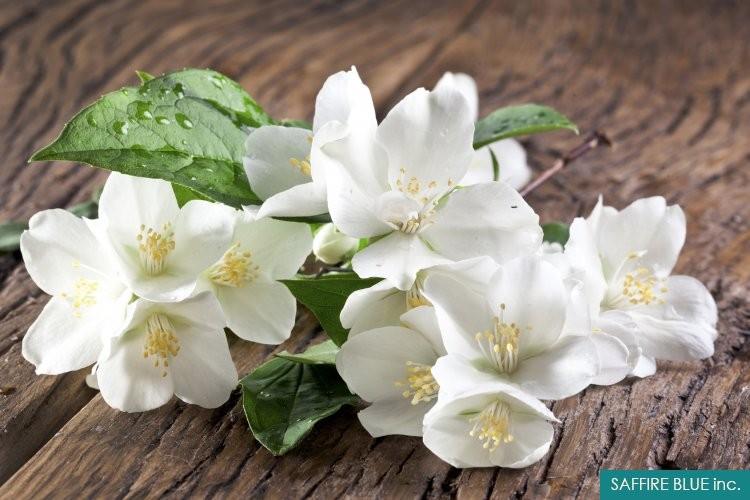 Sambac jasmine absolute