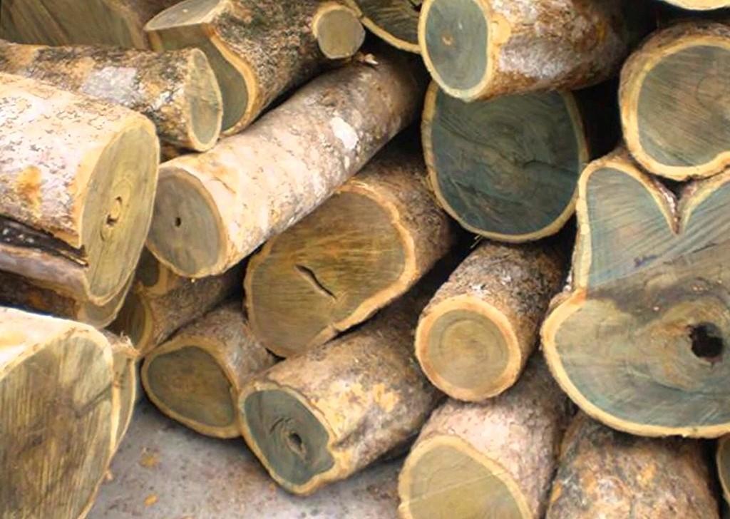 Guaiac Wood